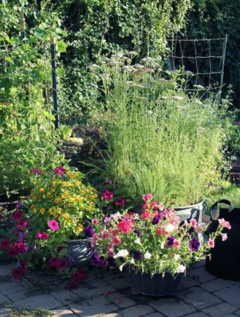 Why I Stopped Using Poison For Weed Control And Started An Organic Vegetable  Garden
